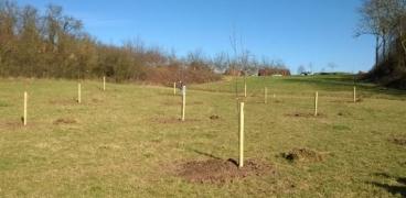 1250 Bäume für Sinsheim
